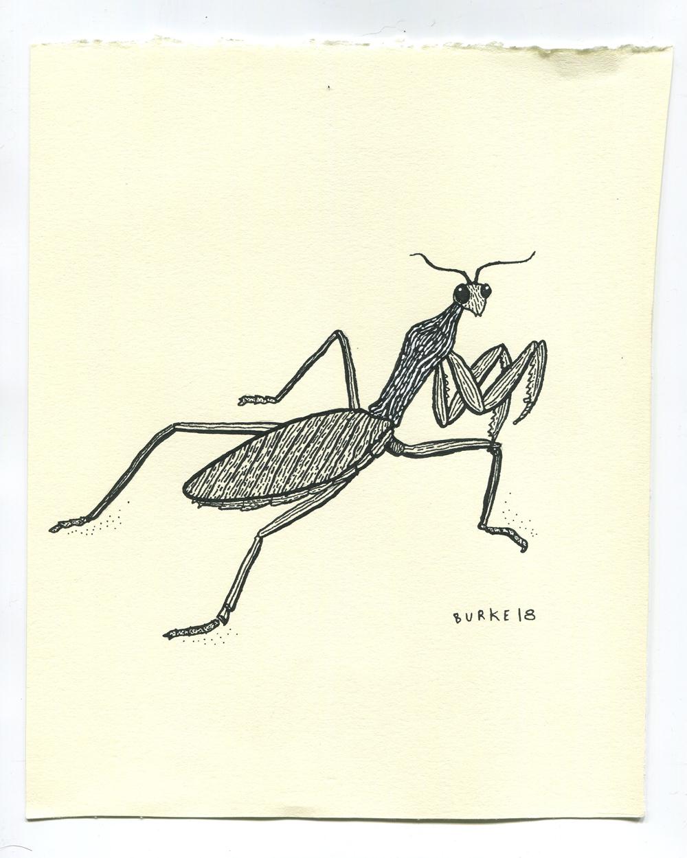 mantisscan